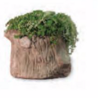 Middle Earth Planter