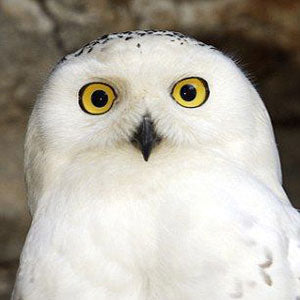 Hurray for Hedwig: Our Owl-normous Harry Potter Give-Away
