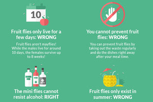 Myths about fruit flies: What really helps!