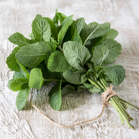 Bushel of fresh peppermint leaves, bundled with twine and lying on a wood countertop.