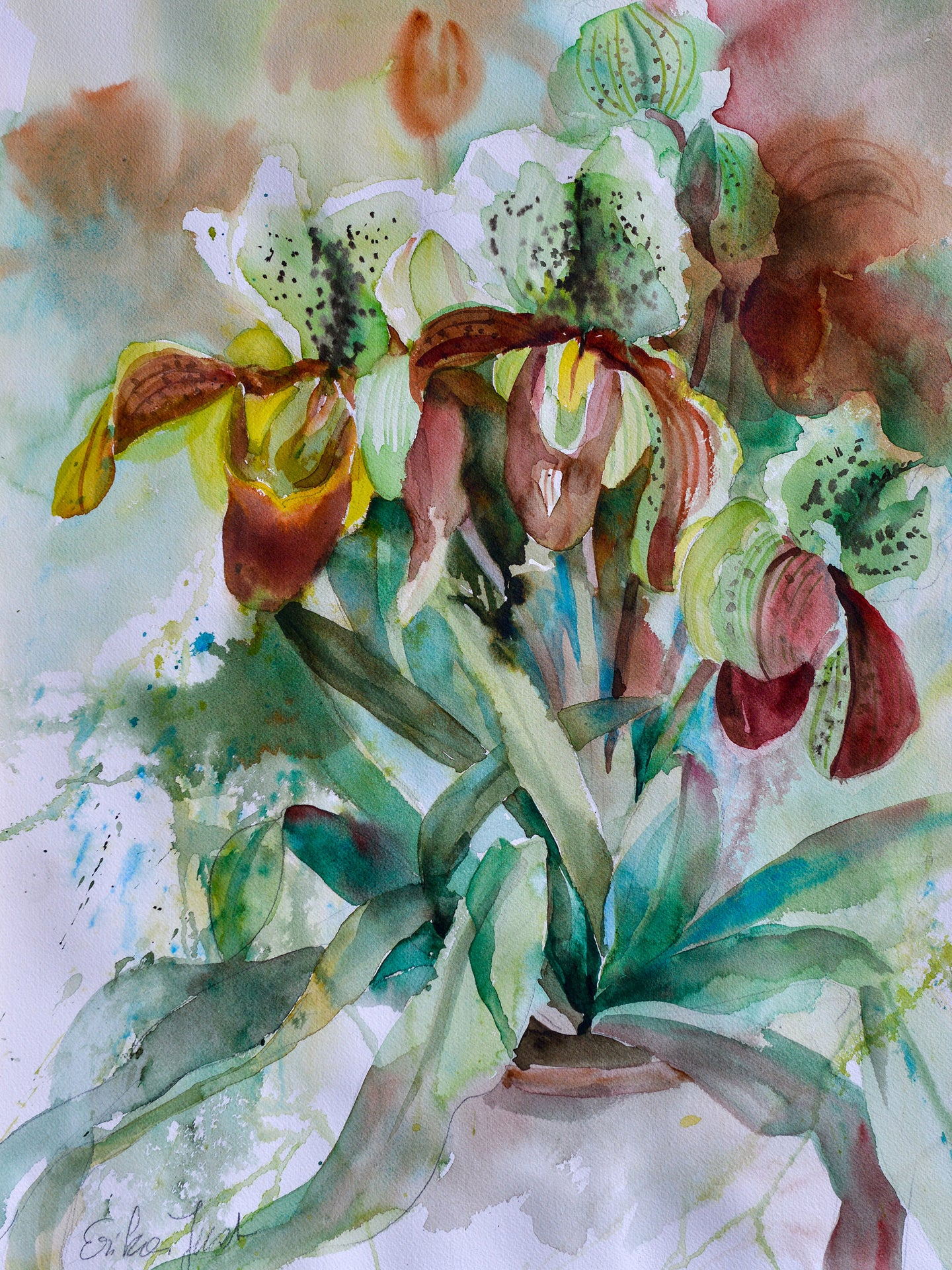 Print - Lady Slipper Orchids