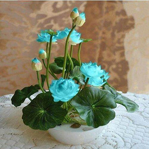 Hot Sale! Lotus Bonsai Hydroponic Plant Seeds For Home Garden Yard Decor (10 Pcs/Pack)