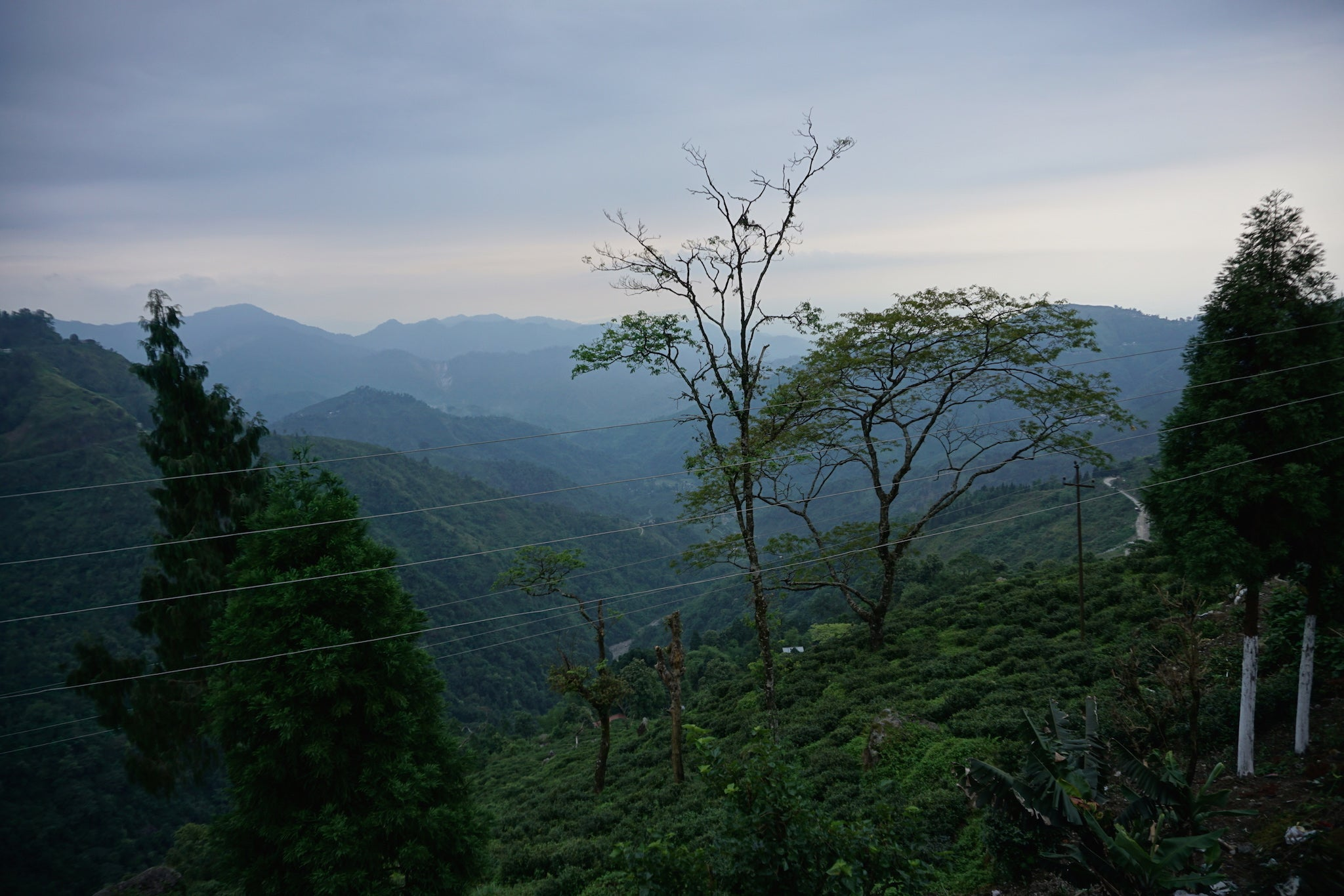 View from Giddapahar across Kurseong Valley