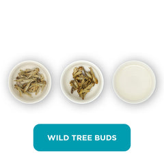 Wild Tree Buds loose leaf tea – three cups showing the plain leaf, the unfurled leaf with the water added and then the final brew of tea.