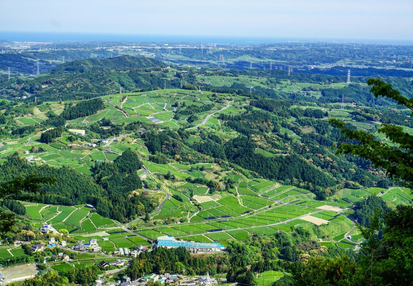 A photo looking down at the tea fields of Shizuoka in Japan. This is the region in which our GABA Sencha green tea is grown.