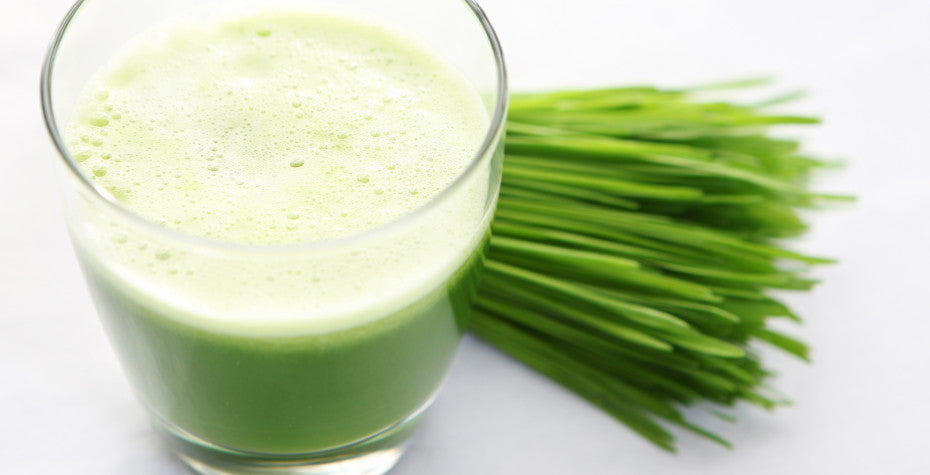 6 Reasons Why Wheatgrass Is a Winner