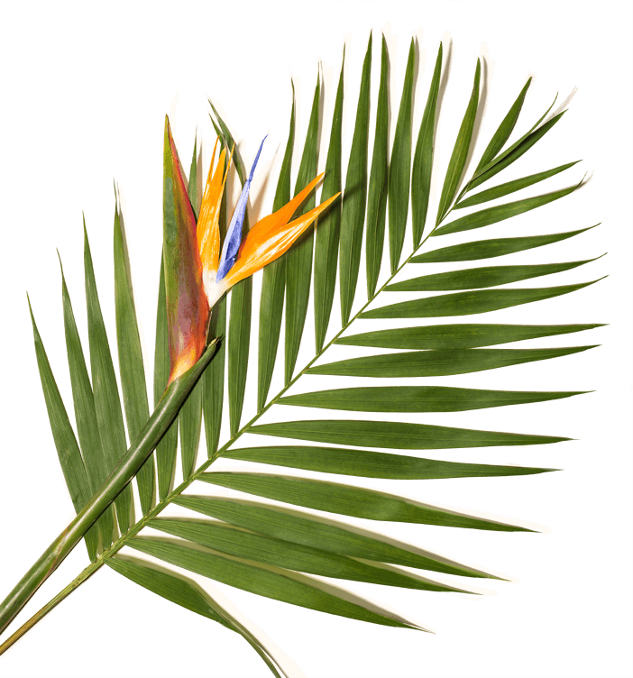 palm tree with bird