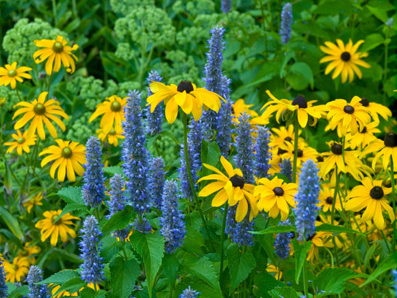 Hardy Perennials For Fall