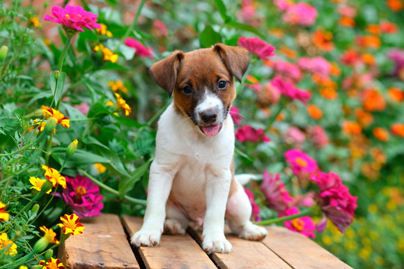 Summer Annuals & Proven Winners Brand