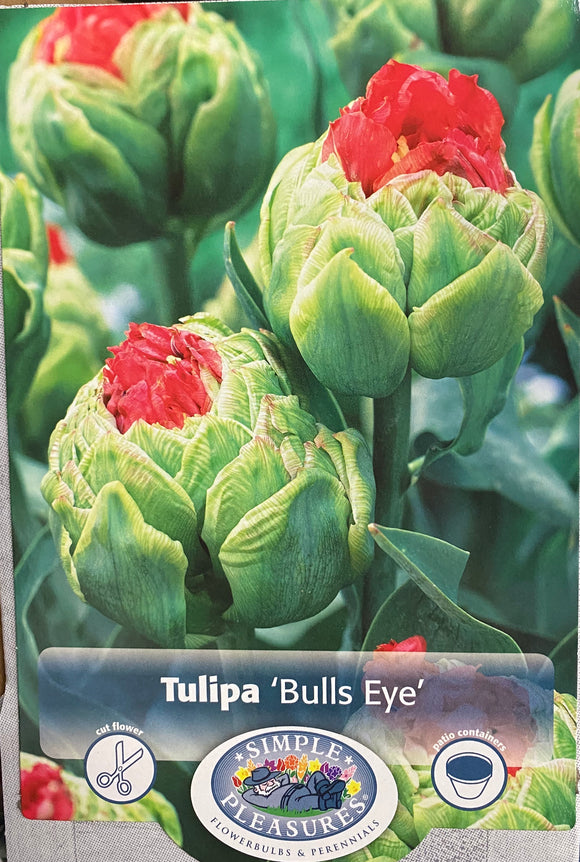 Tulip Bulls Eye Double Late