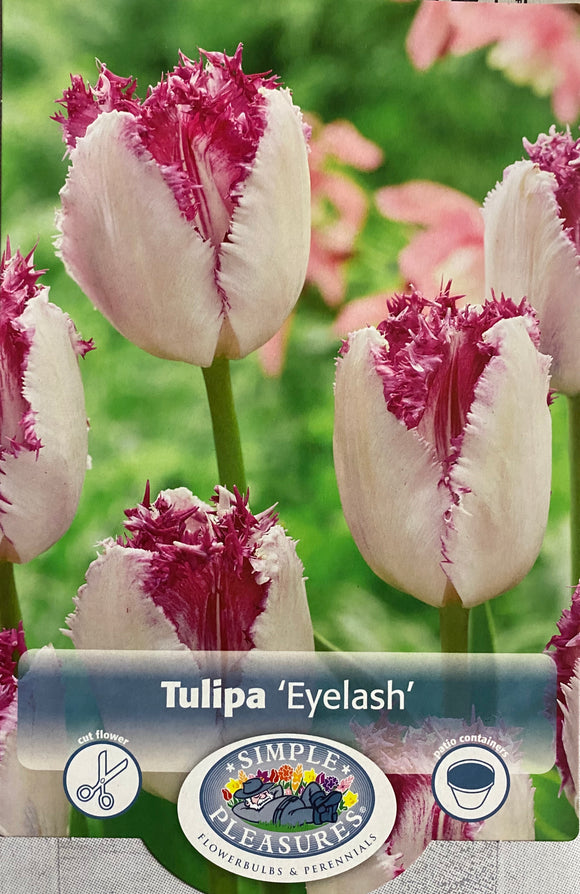 Tulip Eye Lash