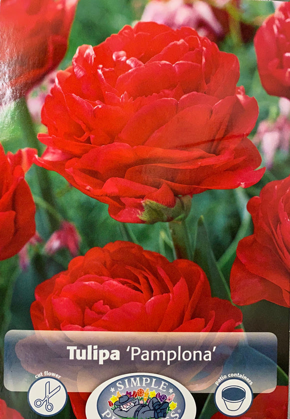 Tulip Pamplona Double