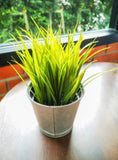 Herbs- Lemon Grass