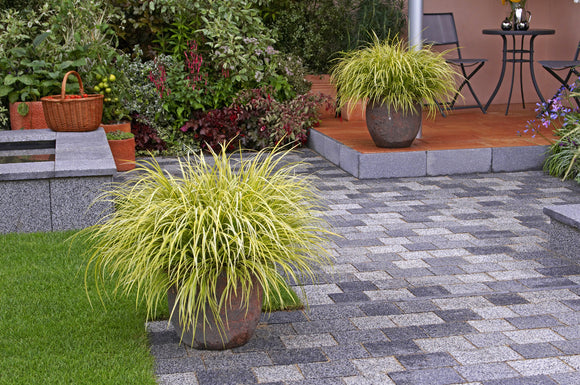 carex deer resistant dwarf sedge ornamental grass evergold carex