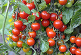 Tomato Plants- 4 Pack