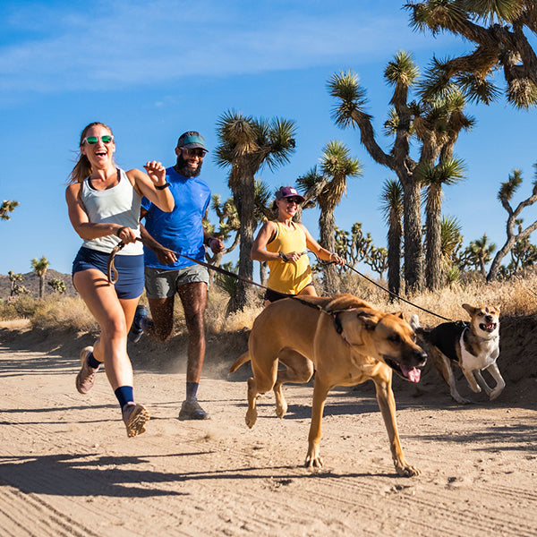 Three people running with dogs