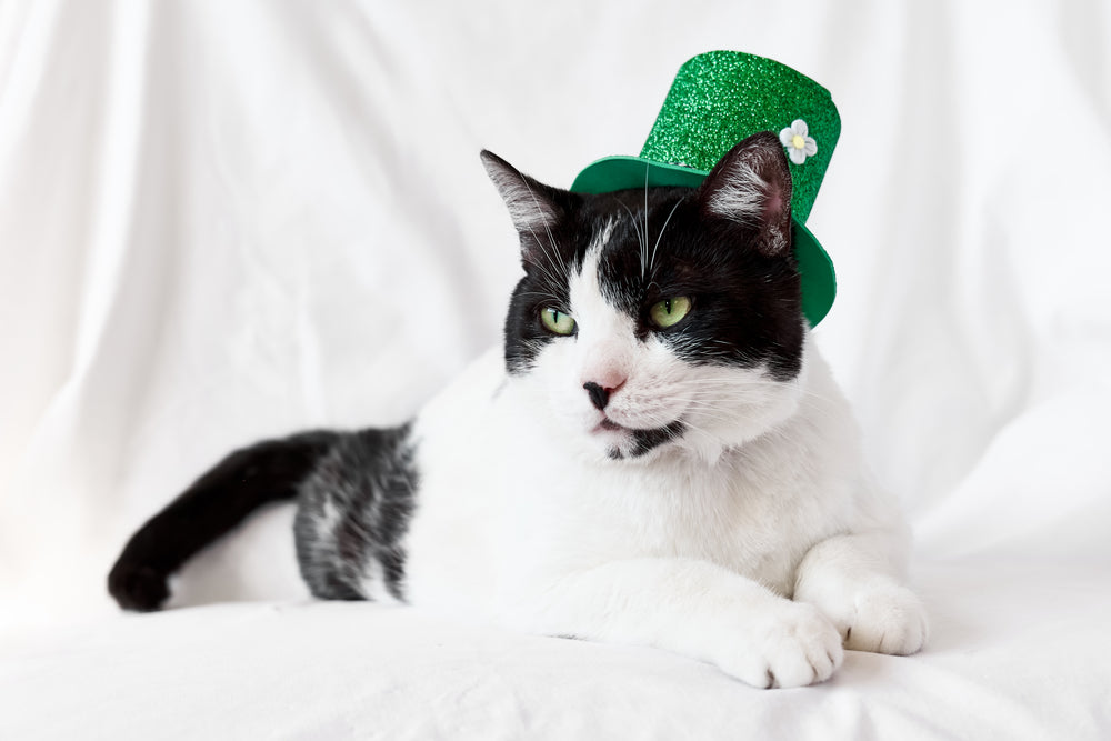 Cat dressed in St Patricks Day outfit