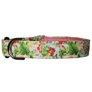 Our Good Dog Spot Bellevue Avenue Gardens Dog Collar