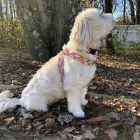 Boothbay Lobster Dog Harness