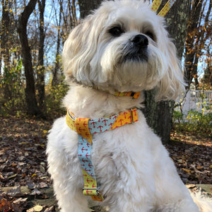 Yachtsman's Anchor Dog Harness
