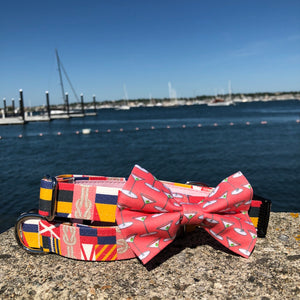 Our Good Dog Spot Coral Martini Bowtie and Coral Corinthian dog collar