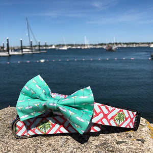Our Good Dog Spot Mint Green Martini Bowtie and Florida Palm Trees dog collar