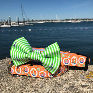 Our Good Dog Spot After 5 Cocktail Dog Collar and Preppy Green Oxford Stripe Anchor Bow Tie