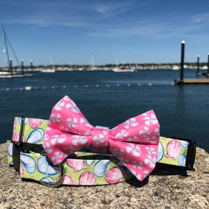 Our Good Dog Spot Pink Propeller Bowtie and Muscles and Clams dog collar