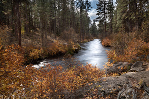 Fall Colors on the Metolius