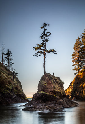 The Lone Tree at Dead Man's Cove