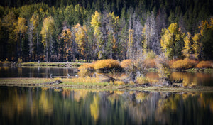 Fall ReflectionsIn Grand Teton National Park