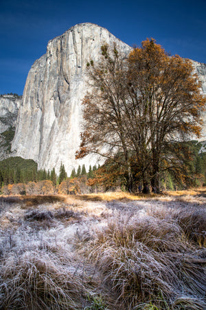 Late Fall In El Capitan Meadow