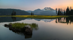 Yellow Bloom At Sparks Lake