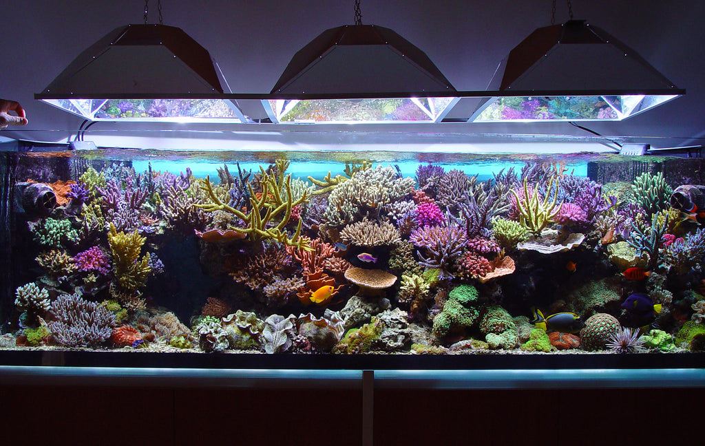 Why You Should Use Reverse Osmosis Water for Your Aquarium – Fresh Water  Systems