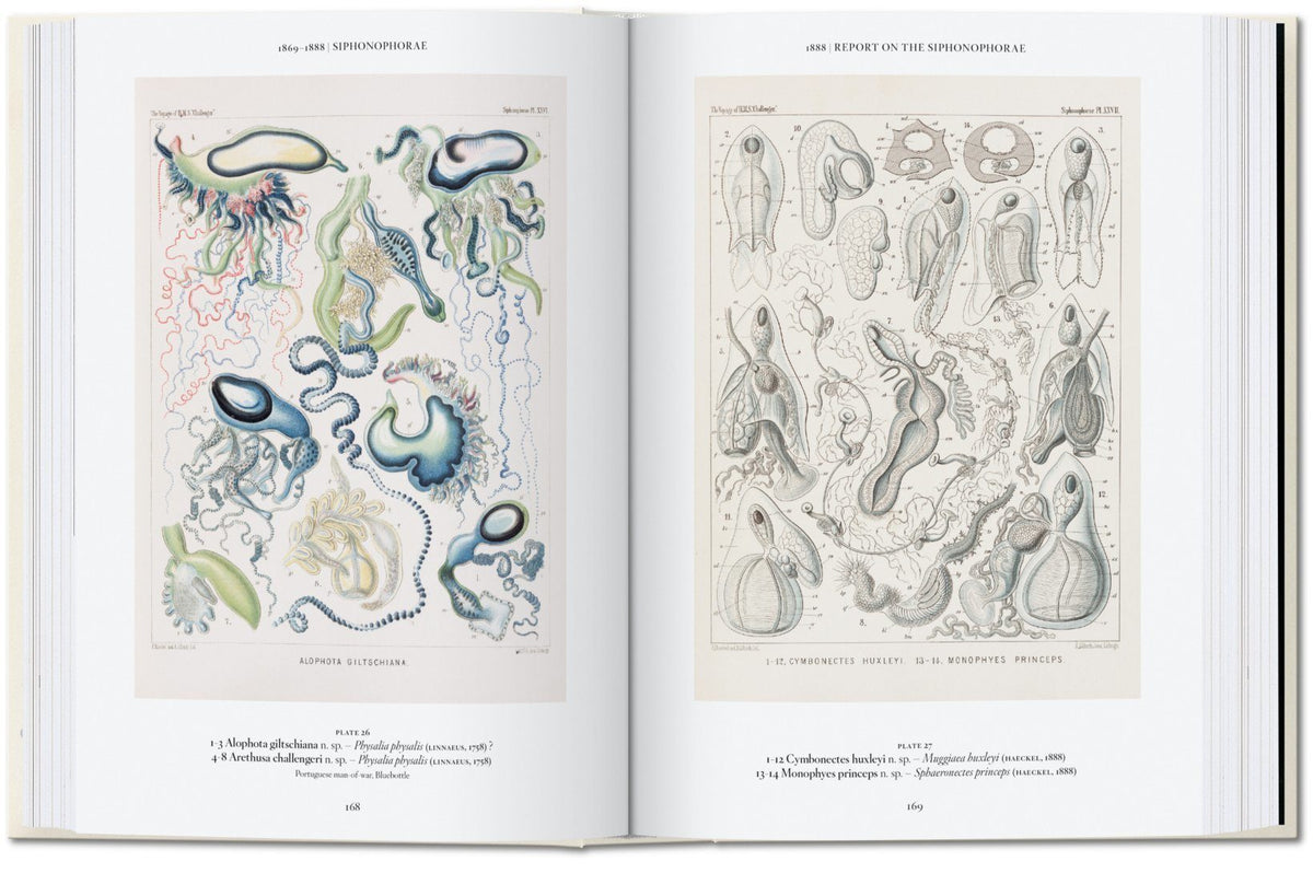 Ernst Haeckel - 40th Anniversary Limited Edition