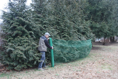 Deer-Terrent bulk rolls protects your Arborvitaes from deer.