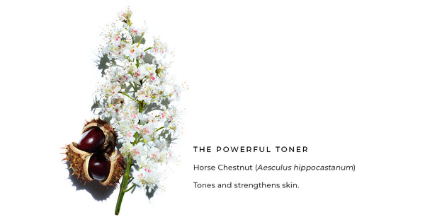 Horse Chestnut Aesculus hippocastanum in FLAUNT BODY mask, the powerful toner