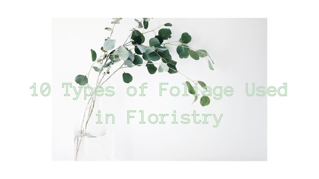 10 Types of Foliage Used in Floristry