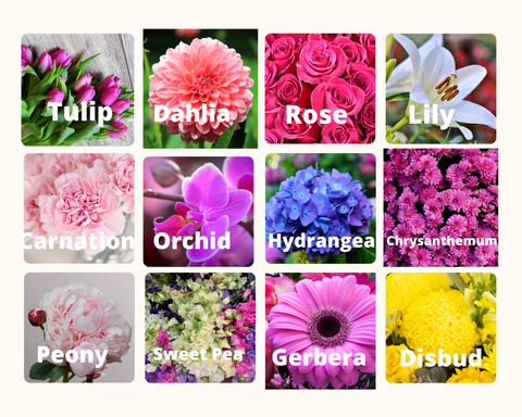 Flower Guide to Common Flowers