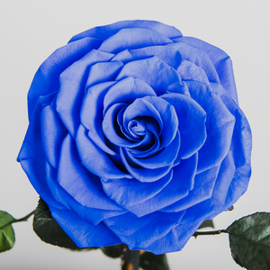 """You're my Queen/King"" Royal Blue Enchanted Rose"