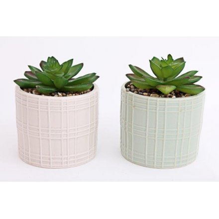Large Potted Succulents - Triftware