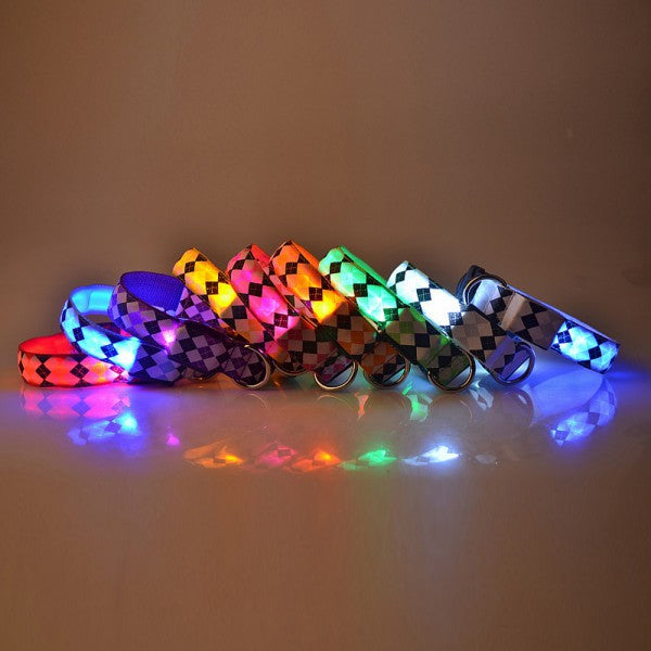 Argyle LED Collar