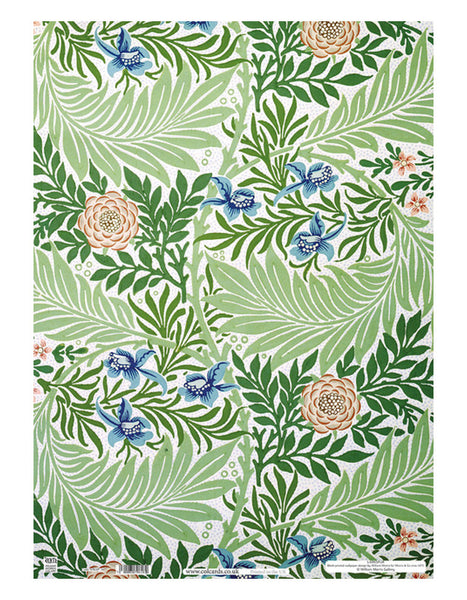 Larkspur Gift Wrap (4 pack)