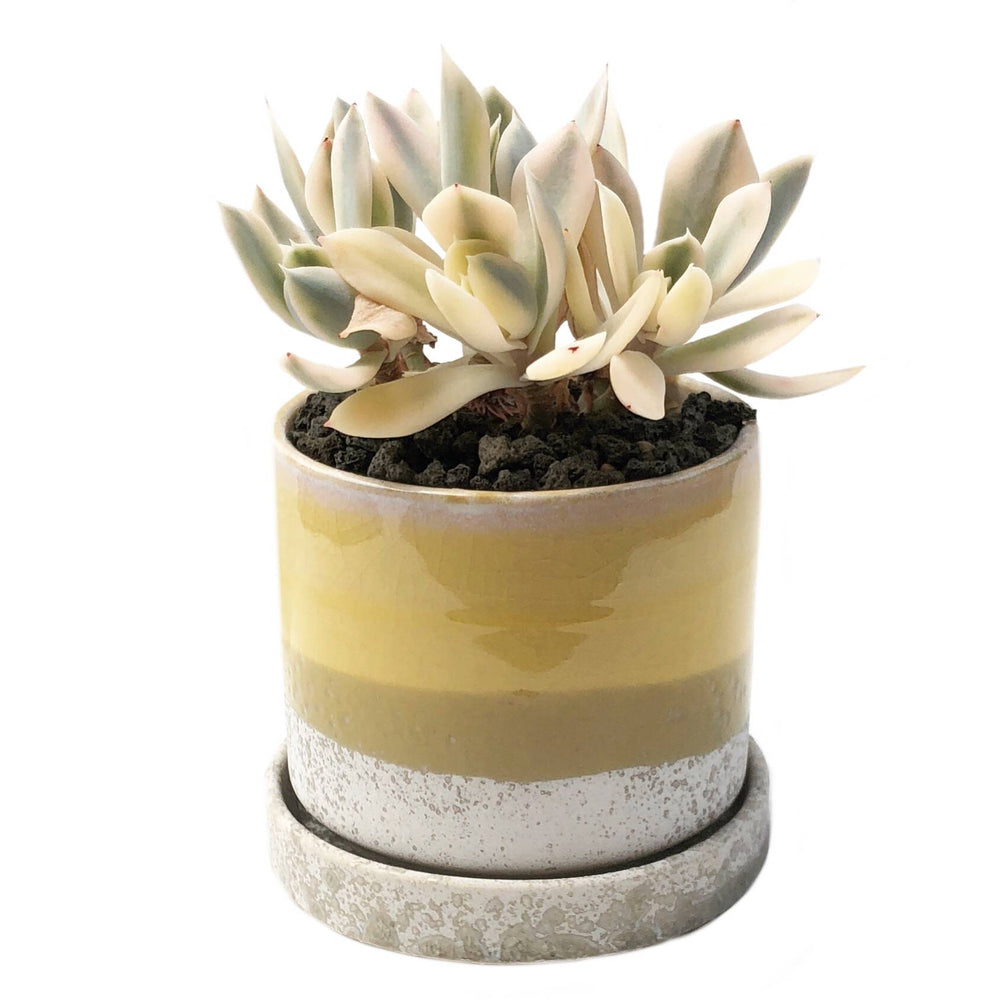 "3"" Ceramic Succulent Pot (Citrine)"