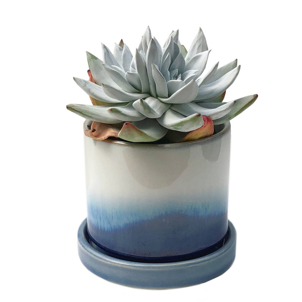 "3"" Ceramic Succulent Pot (Ocean Layers)"