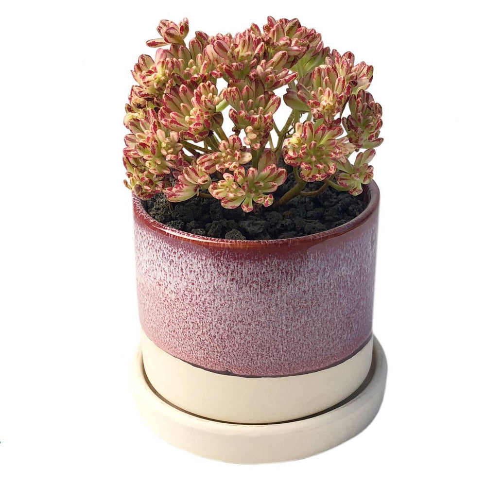 "3"" Ceramic Succulent Pot (Raspberry)"