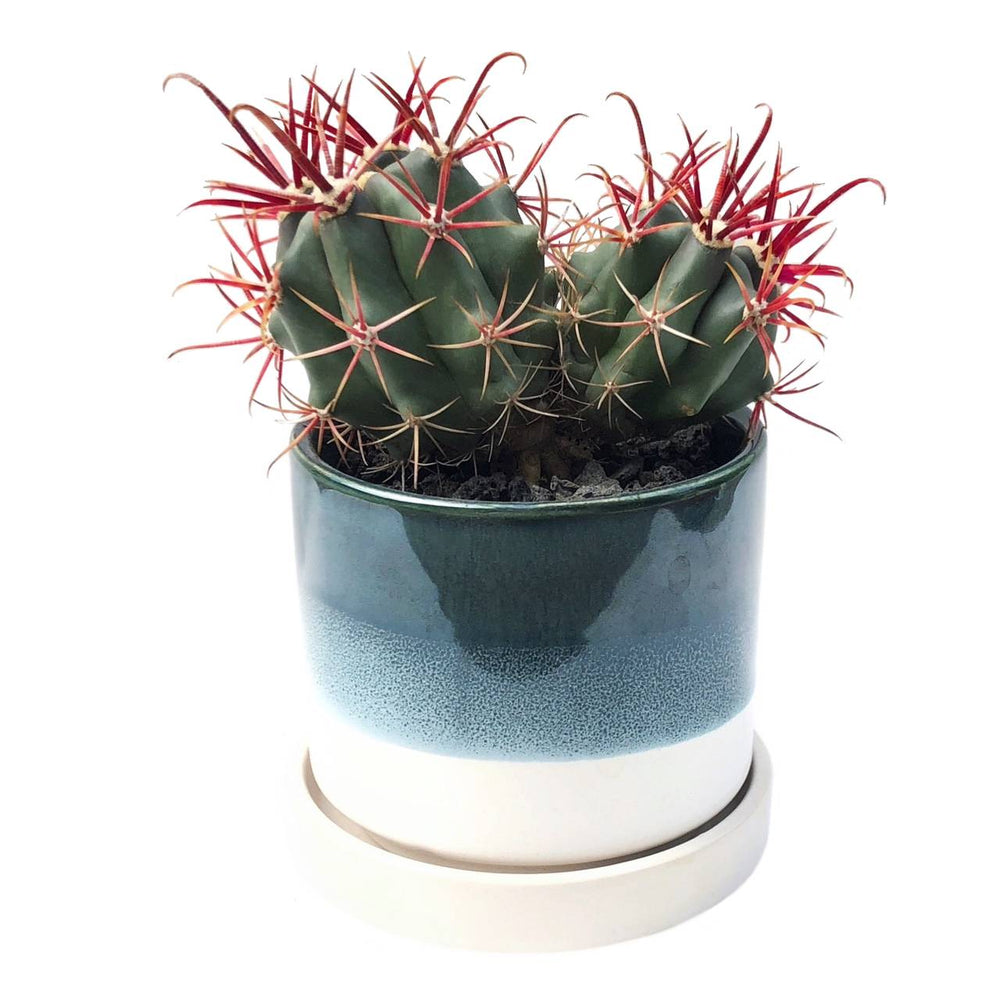 "3"" Ceramic Succulent Pot- Horizon"