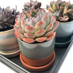 "Glazed 3"" Pot- Canyon (Matte)"