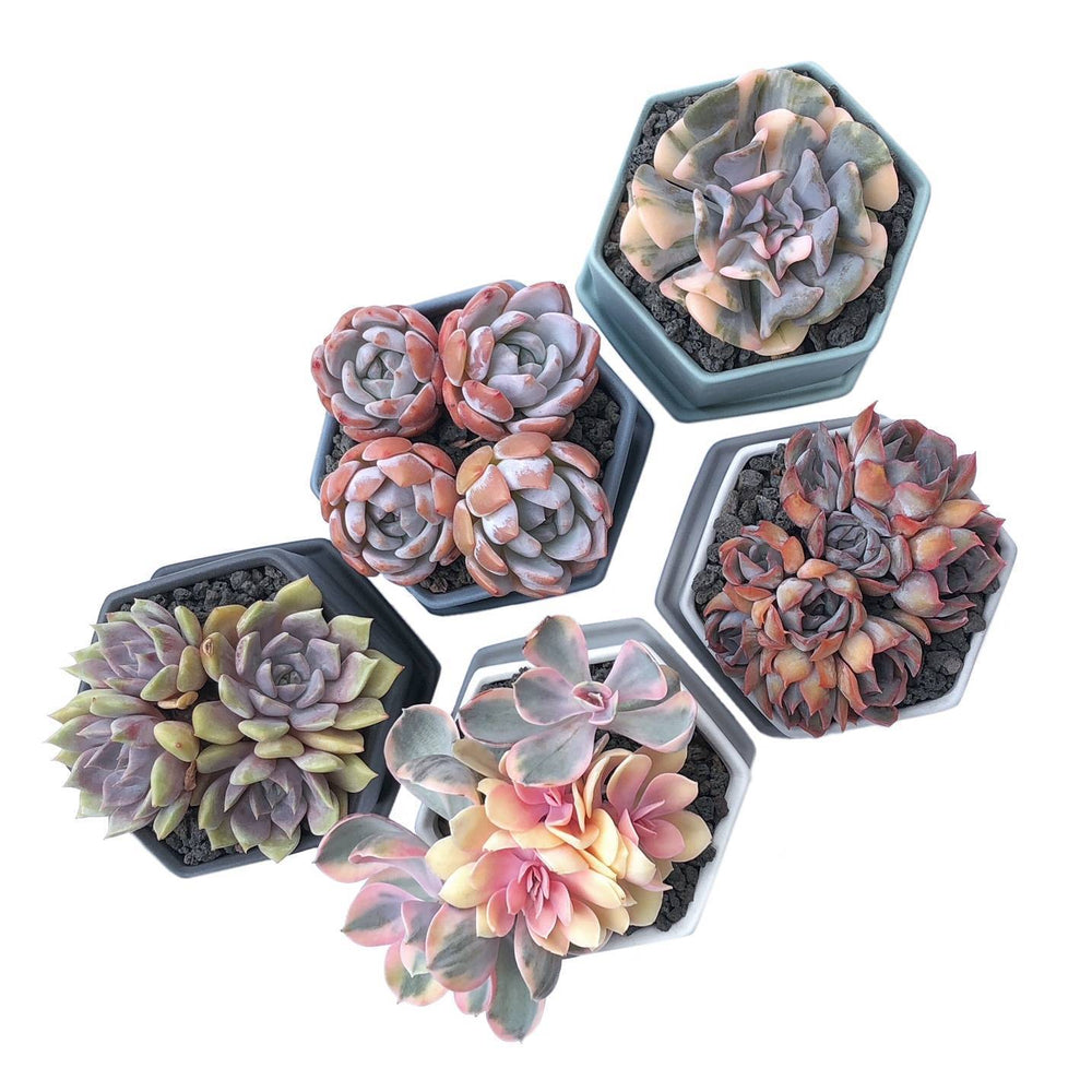 Hexagon Pots- Set of 5