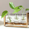 Plant Terrarium with Wooden Stand and Three Glass Vases
